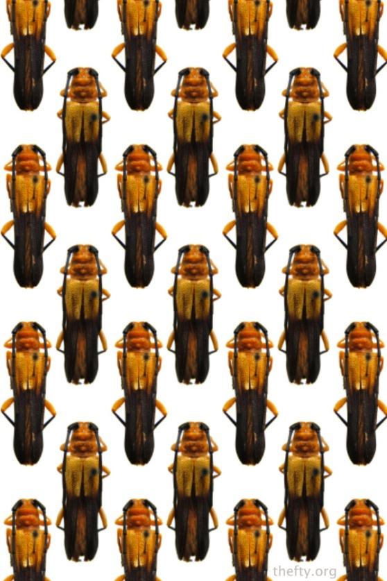 Helena-Maratheftis-beetle-pattern1