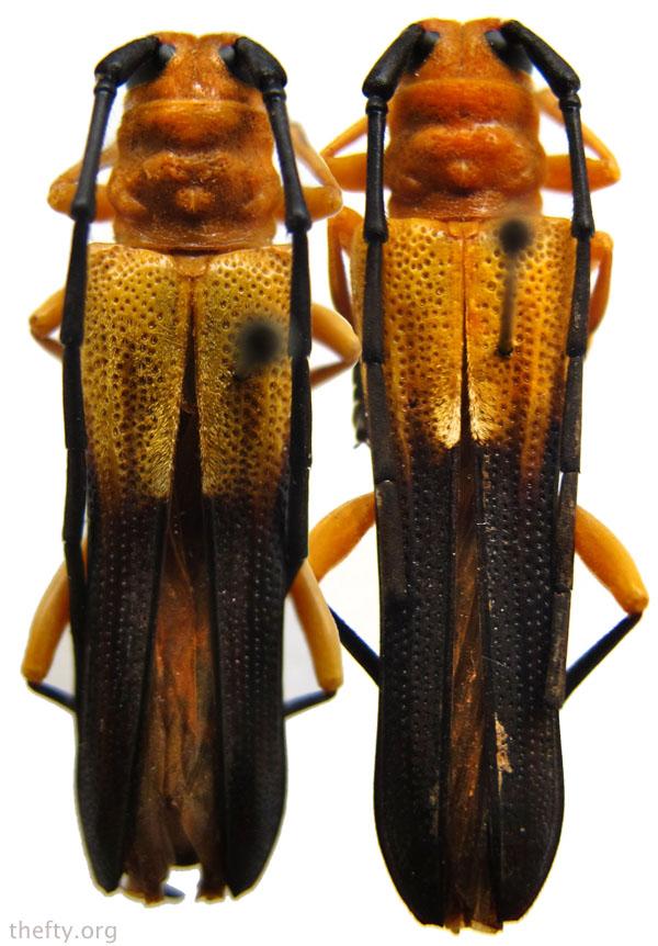 Helena-Maratheftis-beetle-pattern2