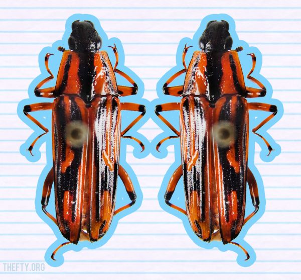 Helena-Maratheftis-beetles-pin-cages-03