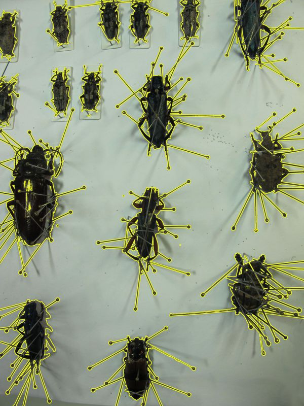 Helena-Maratheftis-beetles-pin-cages-05