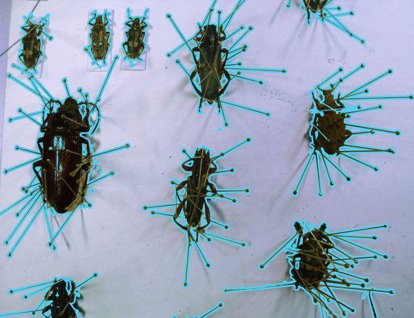 Helena-Maratheftis-beetles-pin-cages-06
