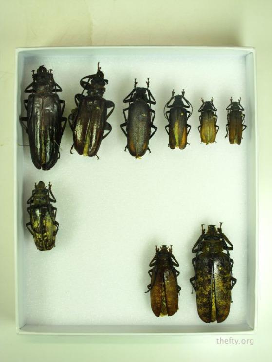 Helena-Maratheftis-coleoptera-beetles-01