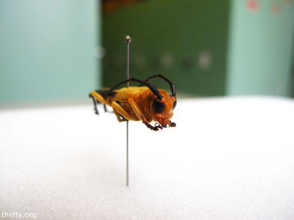 Helena-Maratheftis-coleoptera-beetles-07