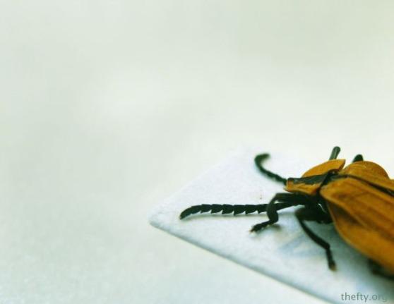 Helena-Maratheftis-coleoptera-beetles-08
