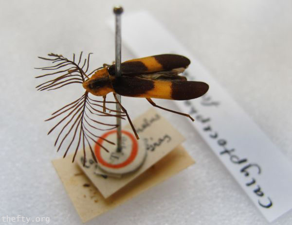Helena-Maratheftis-glow-worms-600-01