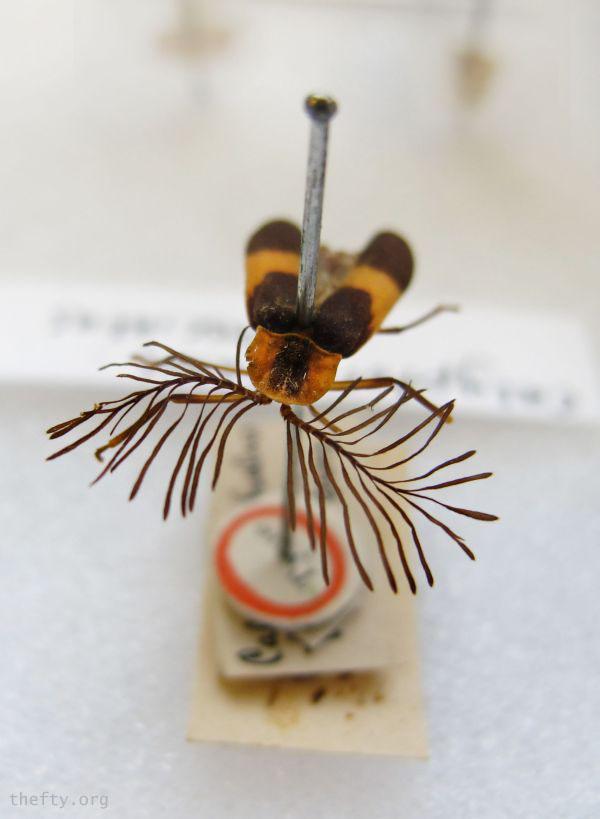Helena-Maratheftis-glow-worms-600-10