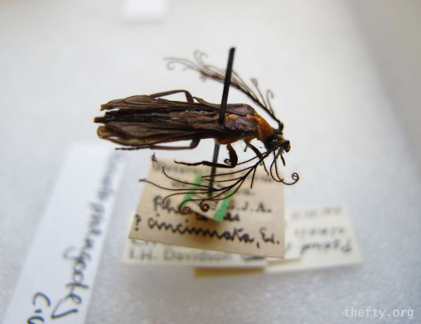 Helena-Maratheftis-glow-worms-600-14