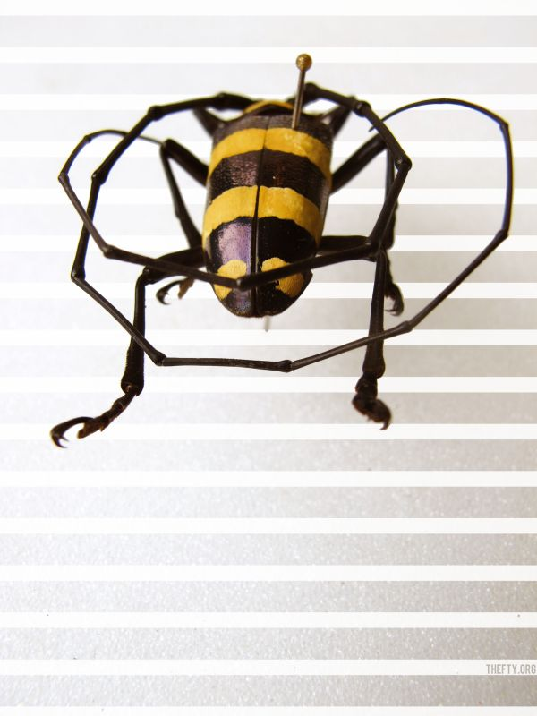 Helena-Maratheftis-gold-stripes2