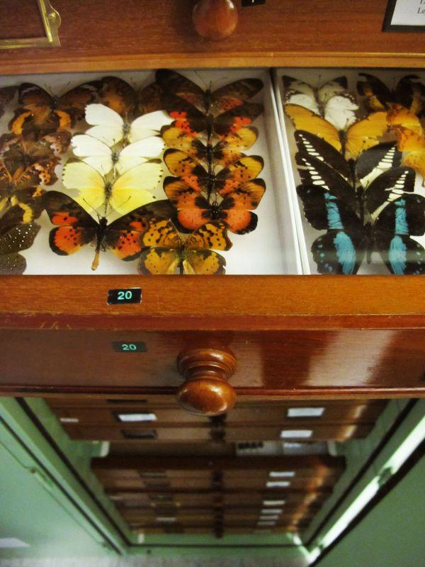 Helena-Maratheftis-butterflies-tanzania-02