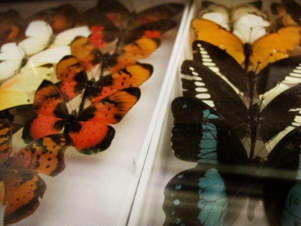 Helena-Maratheftis-butterflies-tanzania-04