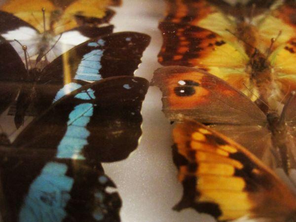 Helena-Maratheftis-butterflies-tanzania-05