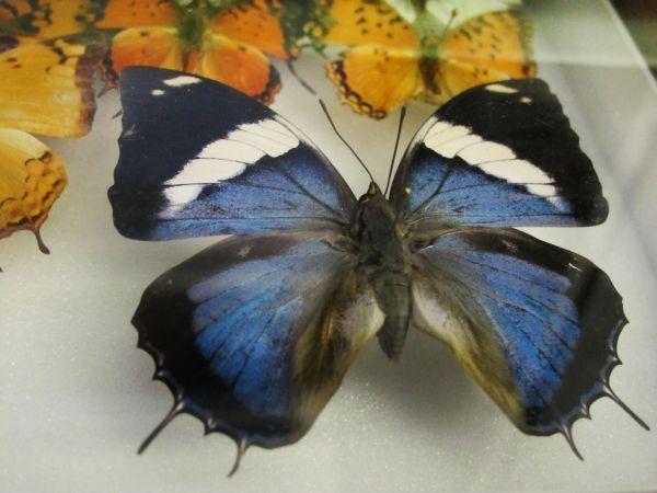 Helena-Maratheftis-butterflies-tanzania-07