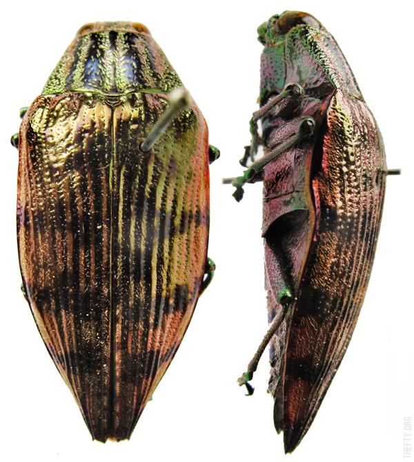 Helena-Maratheftis-Madagascar-3