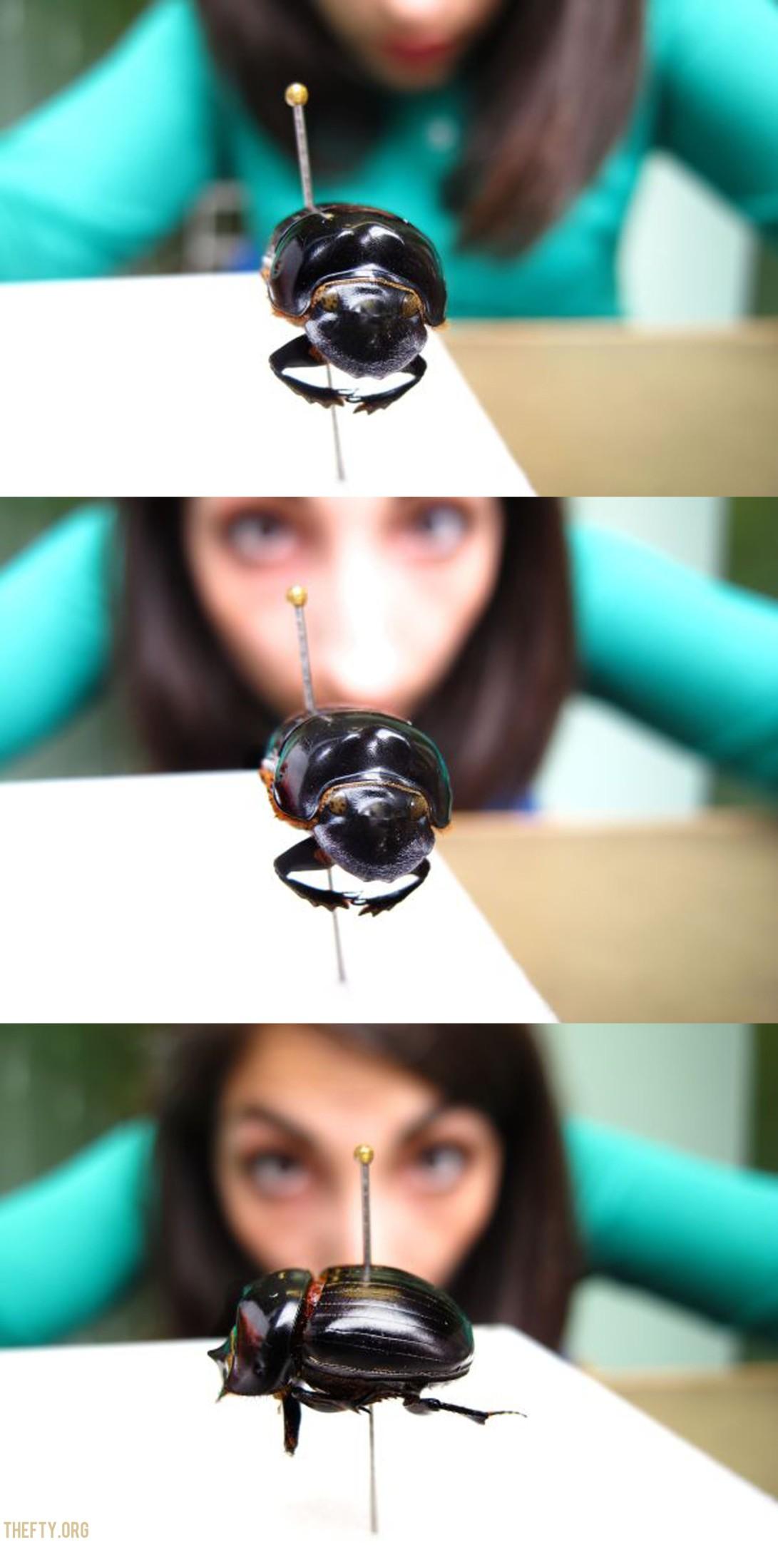 Helena-Maratheftis-beetle-and-me-collage