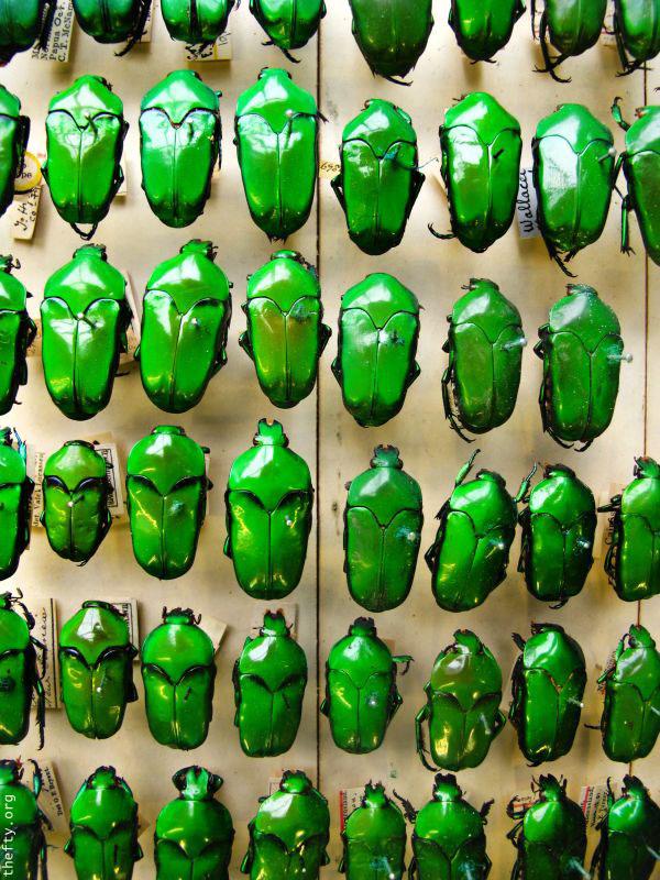 Helena-Maratheftis-emerald-beetles--01