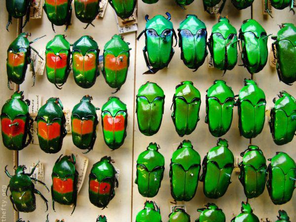 Helena-Maratheftis-emerald-beetles--02
