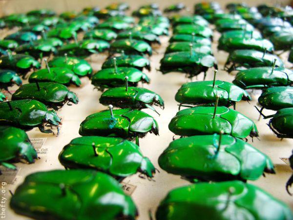 Helena-Maratheftis-emerald-beetles--03