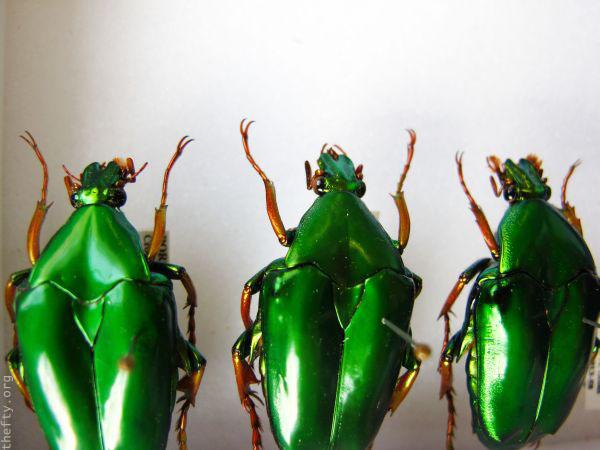 Helena-Maratheftis-emerald-beetles--04