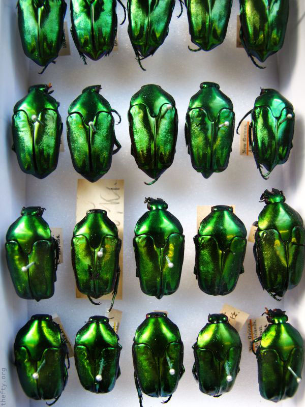 Helena-Maratheftis-emerald-beetles--05