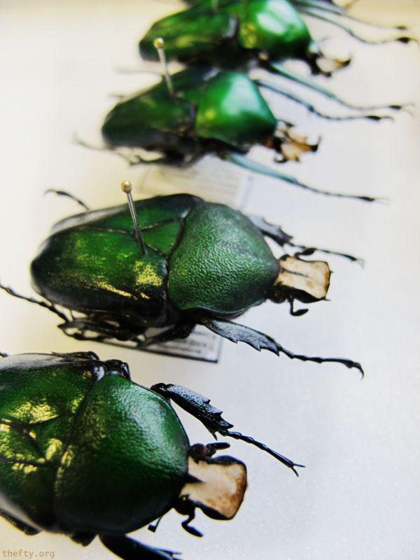 Helena-Maratheftis-emerald-beetles--06
