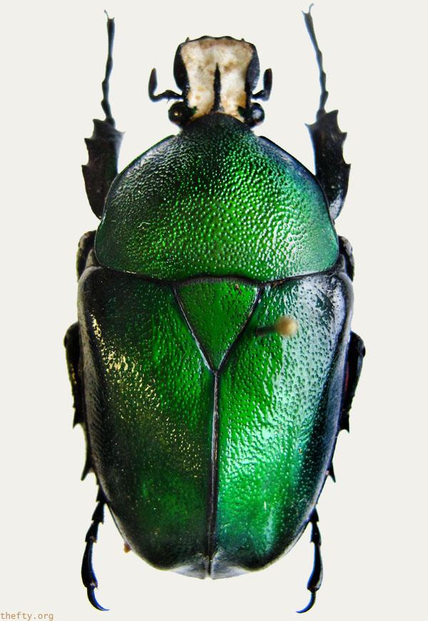 Helena-Maratheftis-emerald-beetles--07
