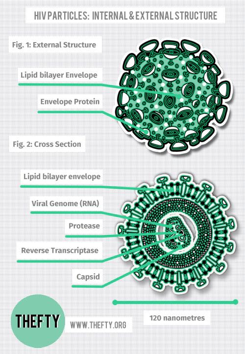 Thefty-HIV-diagram